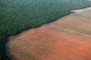 deforestation-brésil